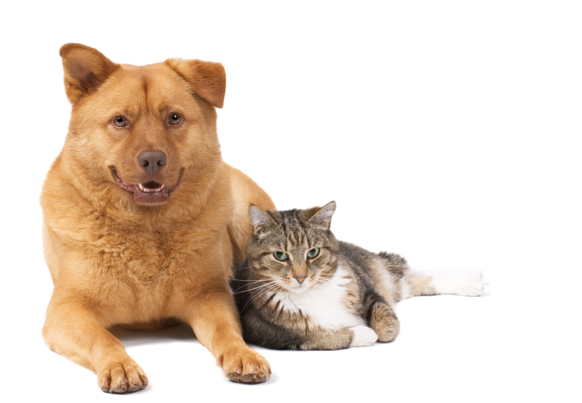 Free Rabies Shots for Your Pets at the Animal Shelter